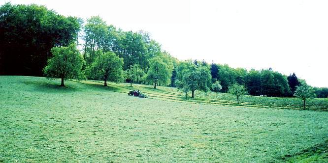 Feld auf Engelberg Aarburg / Dulliken