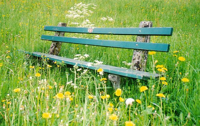 Sitzbank in Wiese bei Trimbach