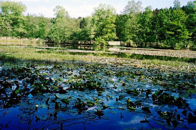 Vorderer See bei Bleienbach