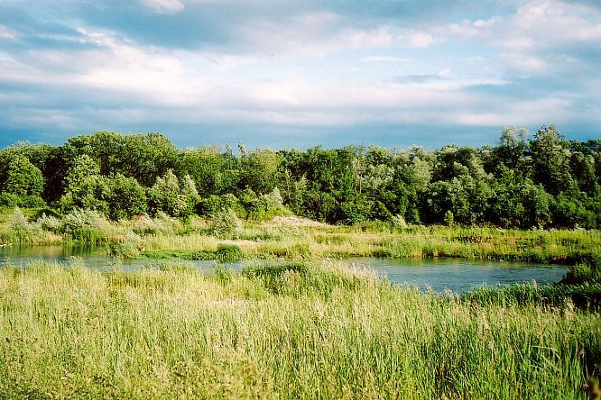 Aaregegend in Ruppoldingen/Aarburg
