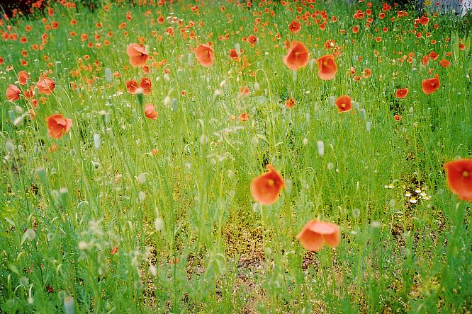 Blumengarten in Wangen bei Olten