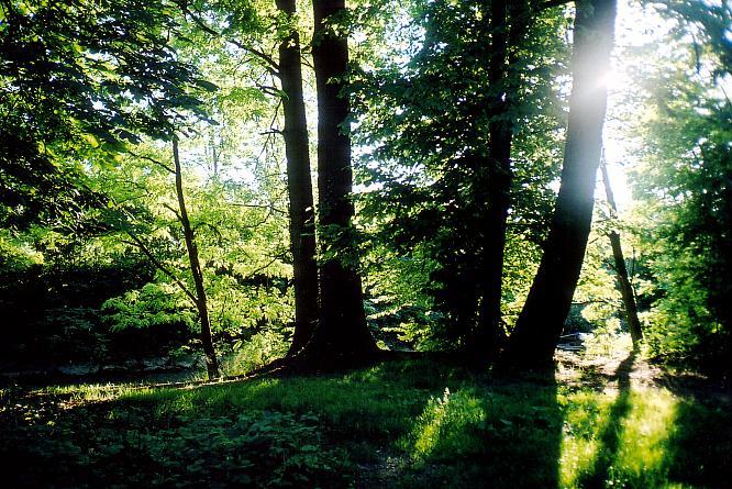 Wald in Oftringen