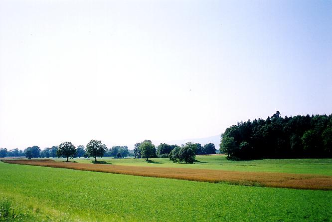 Felder in Bleienbach