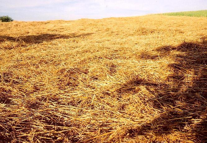 Feld in Wangen bei Olten