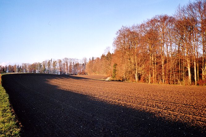 Feld in Williberg