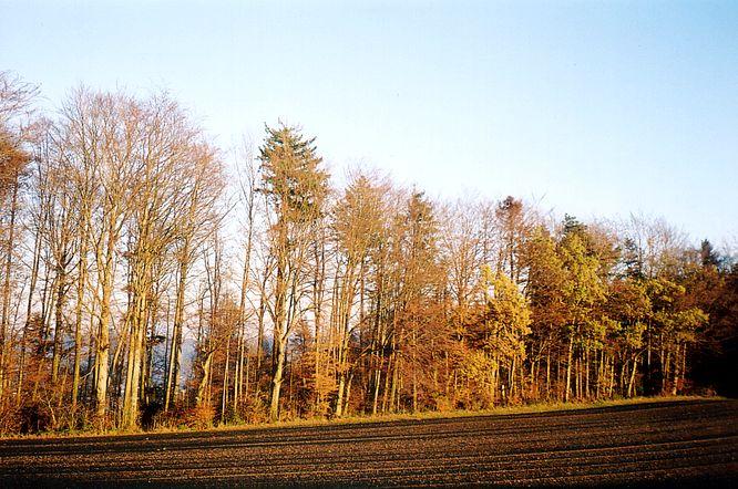 Wald bei Williberg