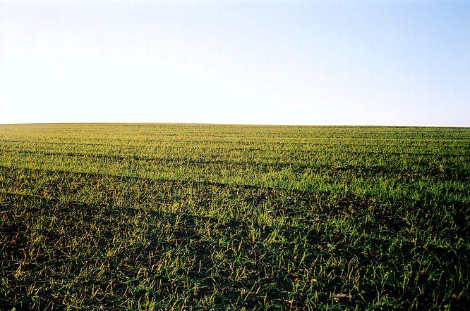 Feld bei Williberg