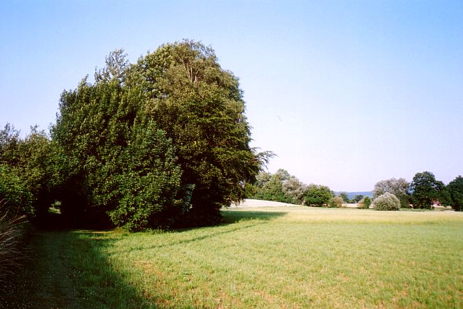 Feld in Rothrist