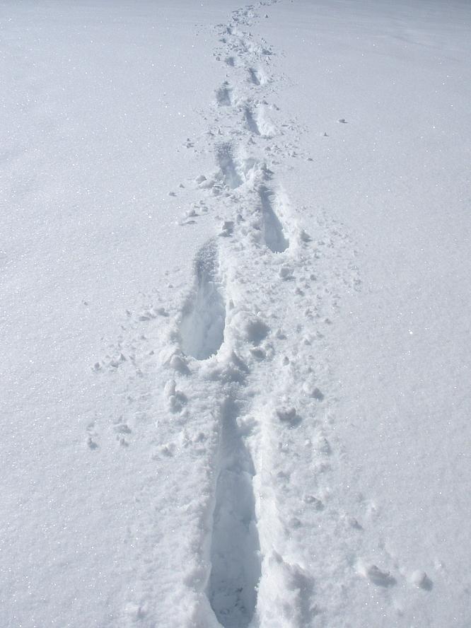 Schritte im Schnee, Olten