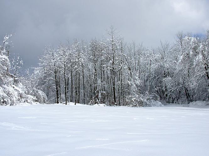 Wald in Olten