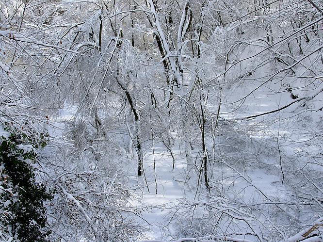 Wald in Olten, Chessiloch