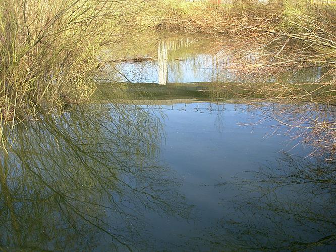 Teich in Aarburg
