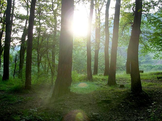 Wald von Geere bei Erlinsbach
