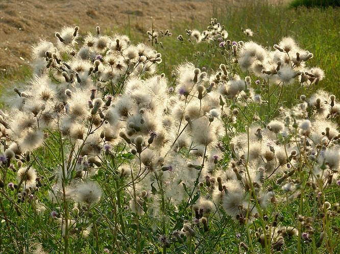 Feld in Aarburg