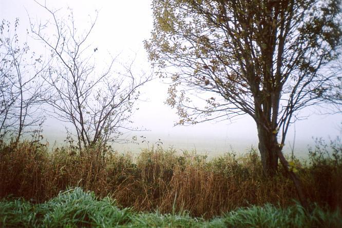 Morgentau in Wangen bei Olten