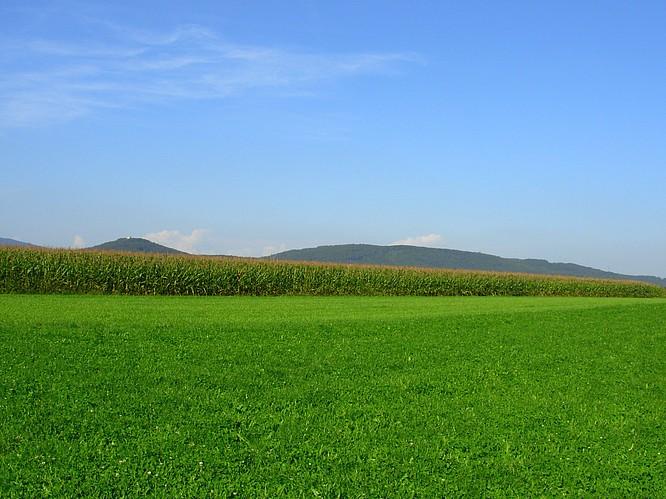 Feld in H�lzliweiden Rothrist