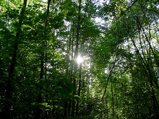 Wald in Aarburg