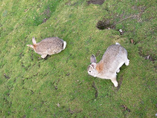 Hasen beim Tierpark bei Schloss Wartensee