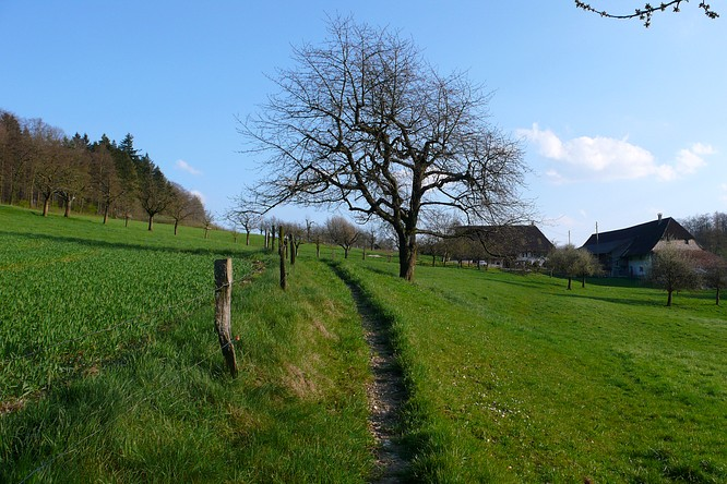 Sattel in Starkirch-Wil