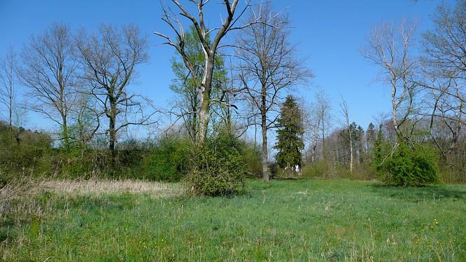 Wald bei Schwarzh�usern