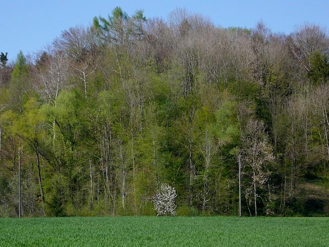 Feld bei Schwarzh�usern