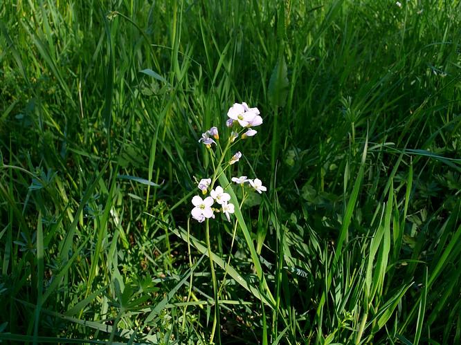 Blume in Schwarzh�usern