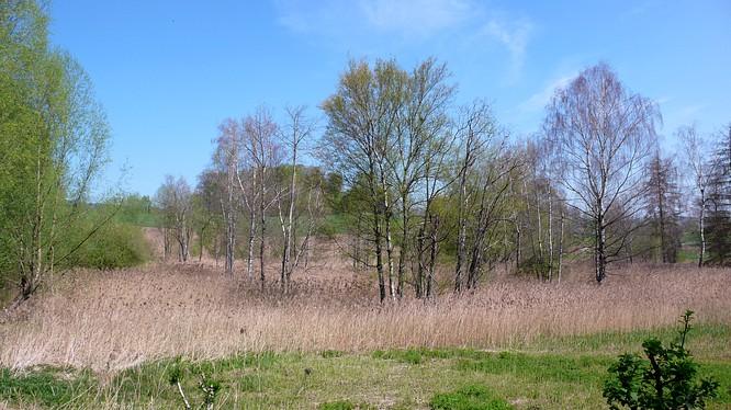 Wald in Ettiswil