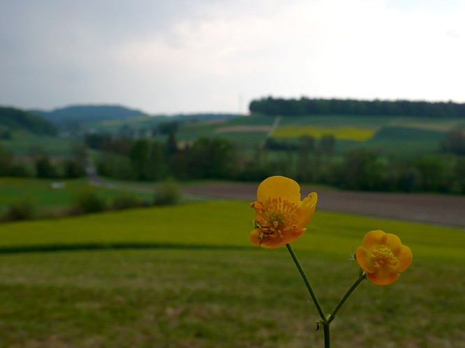 Blume in Untersteckholz