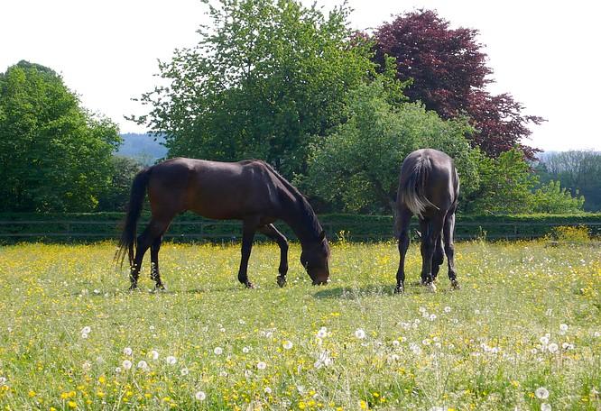 Pferde in Feldbrunnen