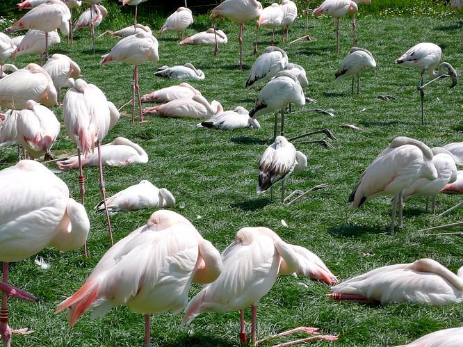 Flamingos im Zoo Basel