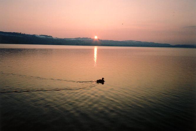 Abendstimmung am See bei Sempach