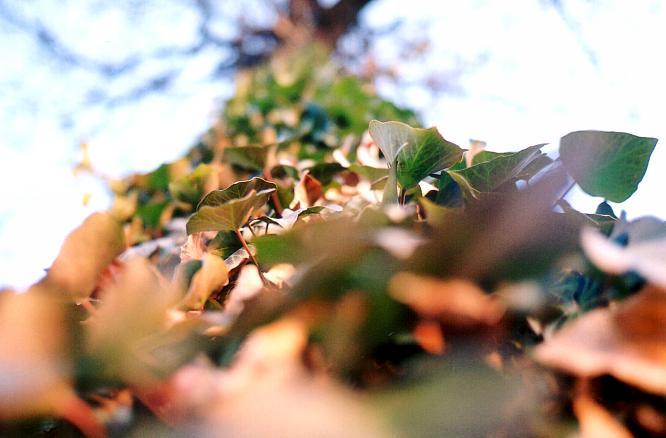 Baum in Sempach