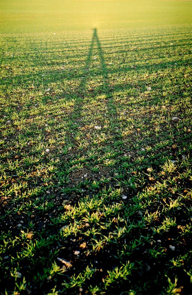 Feld in Rothrist, vor Sonnenuntergang