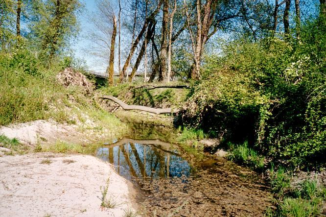 Aareinsel in Aarburg
