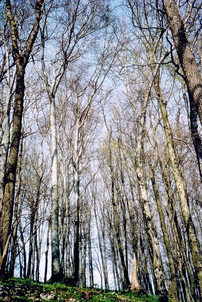 Wald um Engelberg bei Dulliken