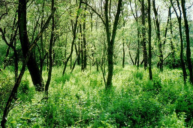 Winznau, am alten Aarelauf