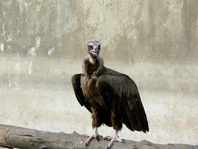 Zoo of Tashkent