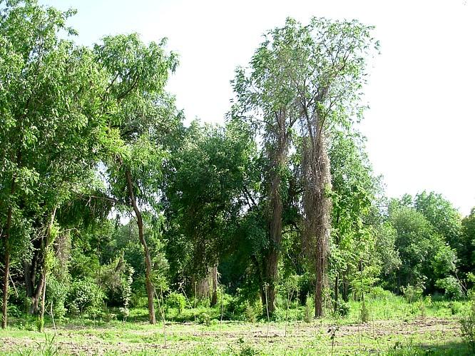 Botanic Garden of Tashkent